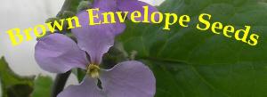 Brown Envelope Seeds