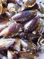 Kilmackillogue mussels