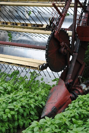 Sacla tour - a machine for cutting basil
