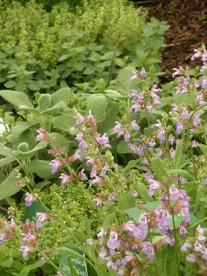 Living Flavour herb garden
