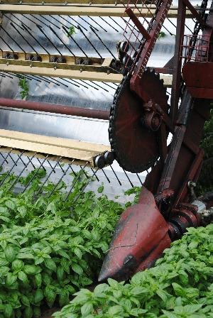 Sacla tour - a machine for cutting basil